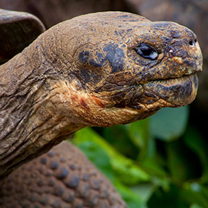 The Gentle Giants of the Galapagos Islands